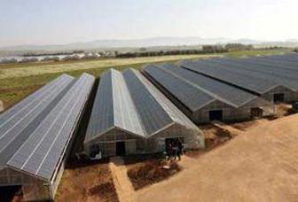 Cebu Solar Agro